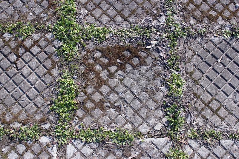 Street paving slabs of cement concrete, grass. Rhombuses. Can be used as a background. Gray street paving slabs of cement concrete covered with moss and grass royalty free stock photos