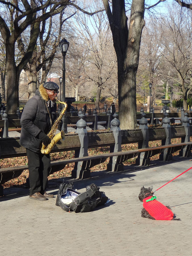 Street Performer in New York City's Central Park. A saxophone player in Manhattan's Central Park has a captive audience in a dog (Terrier) who refuses to budge royalty free stock photos
