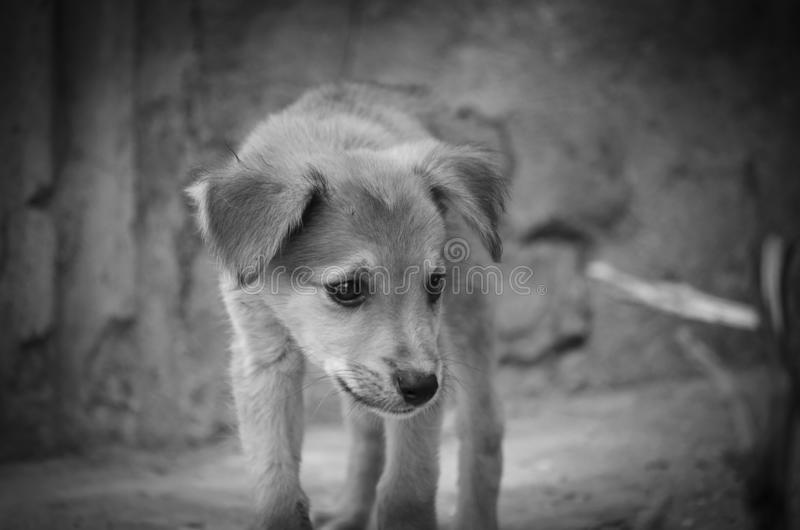 Street puppy looking for food stock photography