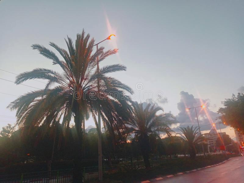 Street in rainy night. Image from Jerusalem street in Rishon Lezion city in tropical rainy night with beautiful cloudy sky.It can be seen Palm trees along the stock photo