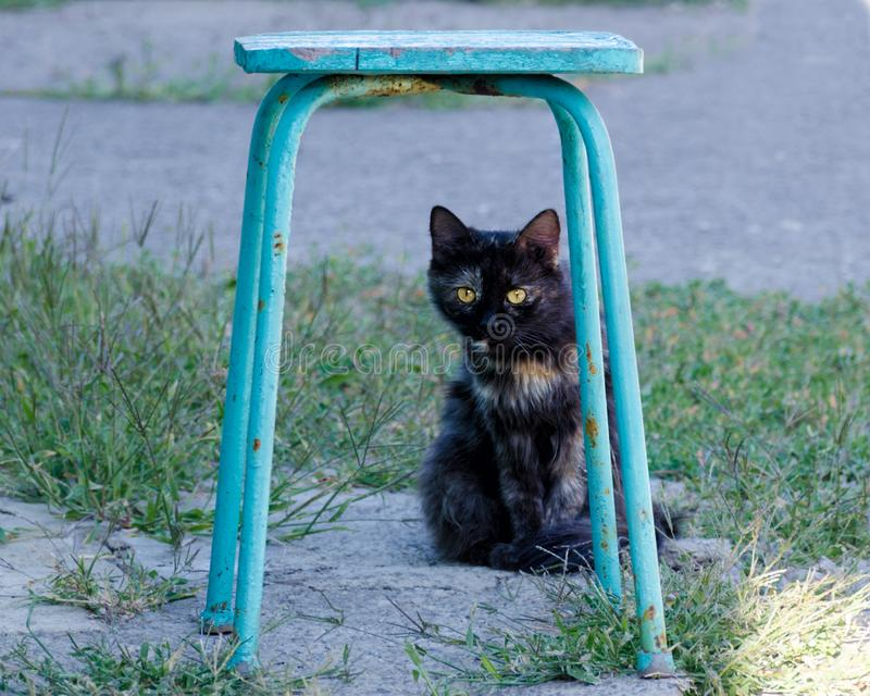Portrait of two-colored cat sitting on outdoor. Street red black cat hides under a chair. Portrait of two-colored cat sitting on outdoor stock images