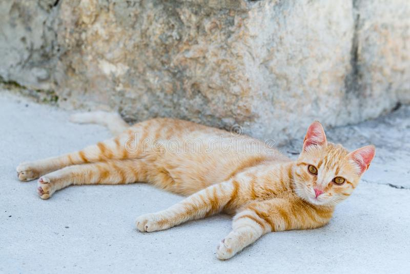 Street red cat rests. At the summertime afternoon royalty free stock photo