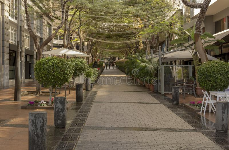 Shaded with with trees. Street in Santa Cruz Tenerife shaded with with trees stock images
