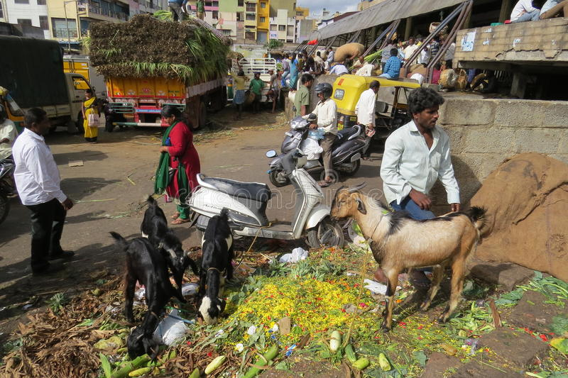 Street scene outside of KR market,Bangalore. Goat and small ones munching on discarded flowers and vegetables royalty free stock photography
