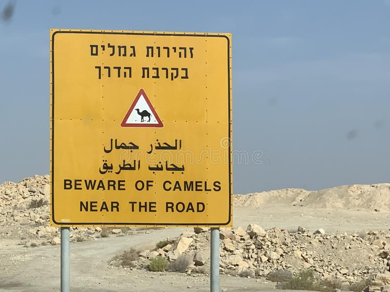 A street sign in Israel Negev desert, concerning camels. A yellow street sign in Israel Negev desert, concerning camels. Warning of camels moving near the road stock images