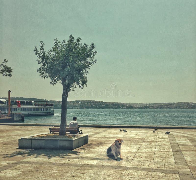 Streetphotography in Istanbul, Turkey. Street streetphotography istanbul turkey dog stock images