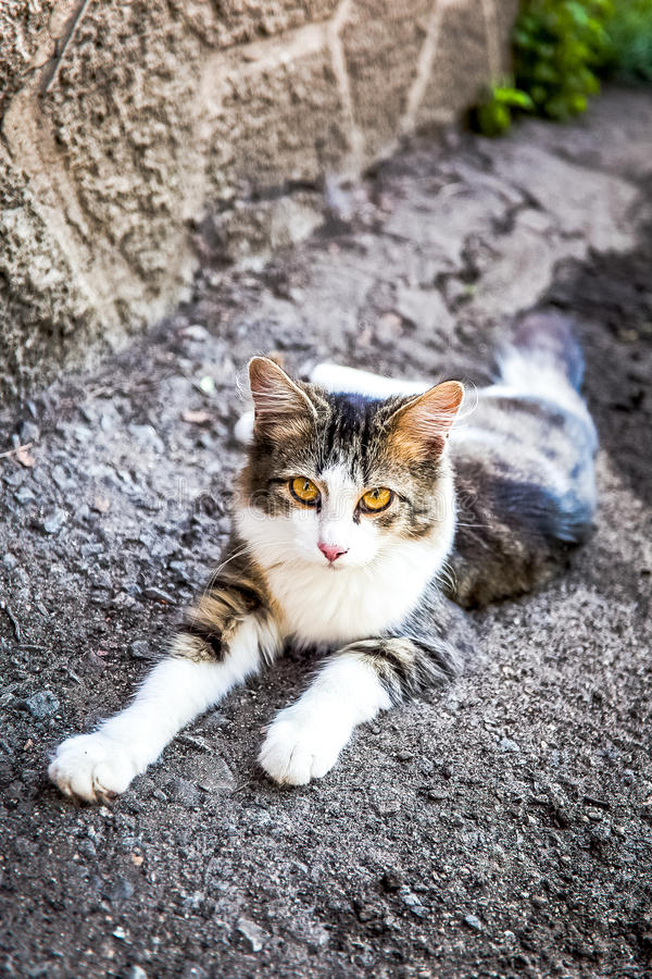 Street tabby cat lying in the shade. At summer day stock photography