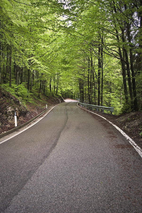 Street among trees royalty free stock photography