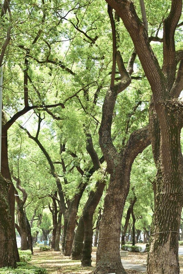 Street trees stock photos