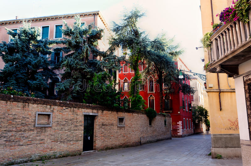 Street trees, Venice, Italy stock images