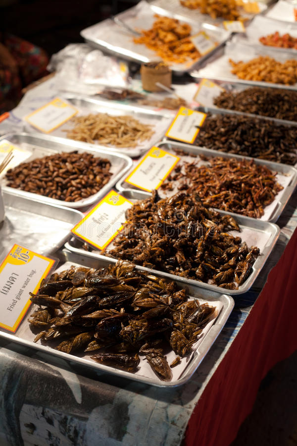 Street vendor selling insects to eat. Street vendor at night market in Chiang Mai sells various insect species to eat. The insects are deep-fried in oil to make stock photography