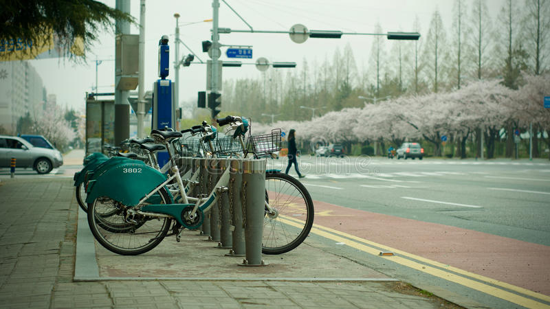 Street view: Cycles in a stand during spring season with cherry blossoms. royalty free stock images