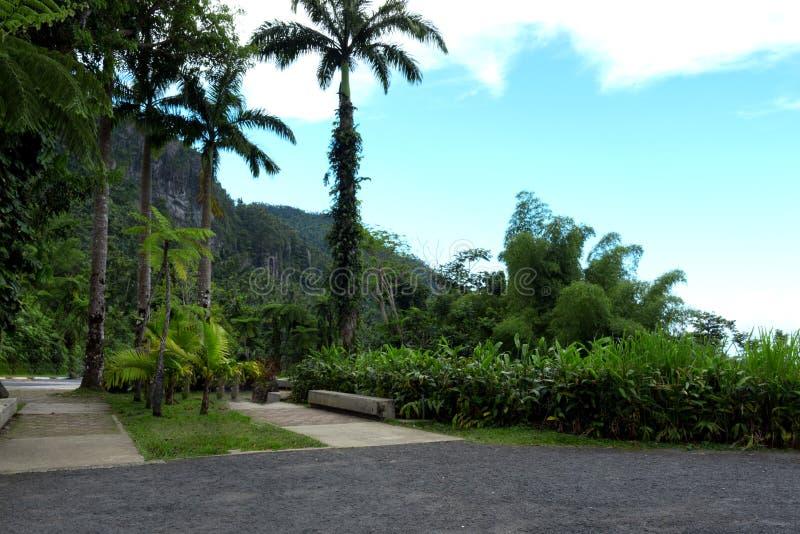 Street View des arbres de forêt tropicale avec le ciel bleu images stock
