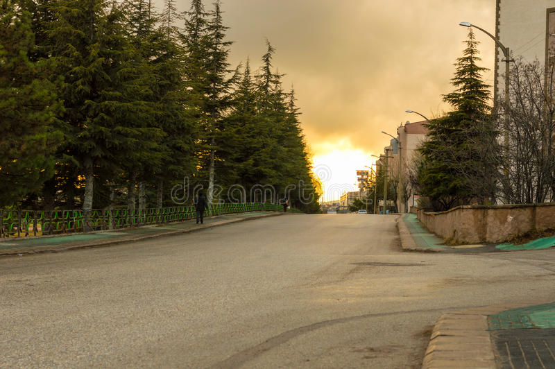 Street view with old pine trees in Eskisehir, Turkey. People walking in an empty street royalty free stock image