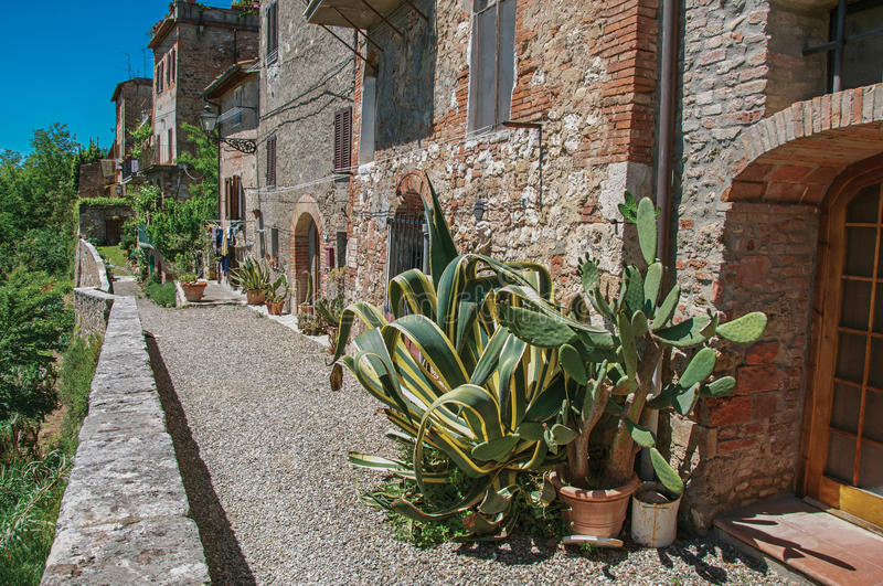 Street view with pebble walkway, cactus plants at Colle di Val d`Elsa. stock photo