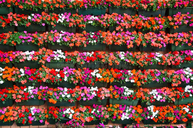 Street wall covered with flower pots, Floral pattern background. Close take on a wall covered with flowers, used as a background pattern stock image