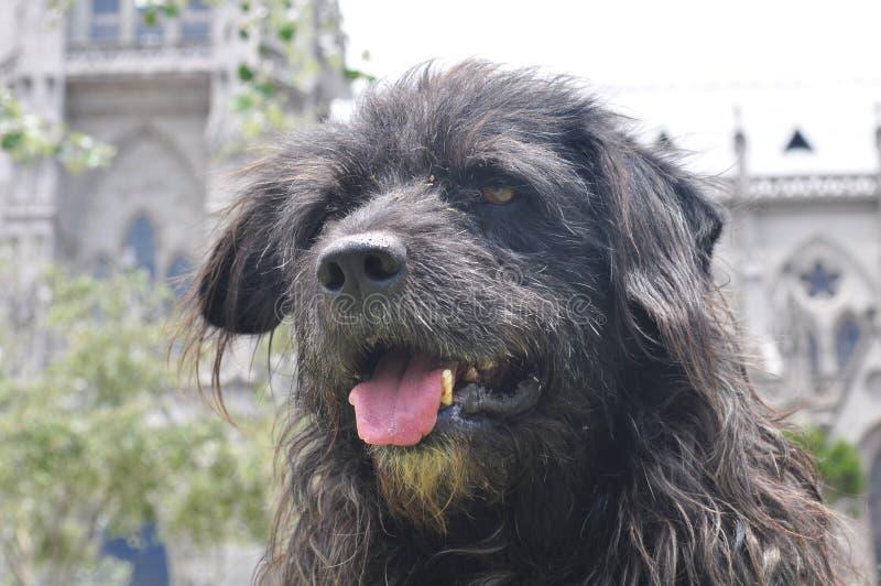 Streetdog fotografía de archivo libre de regalías