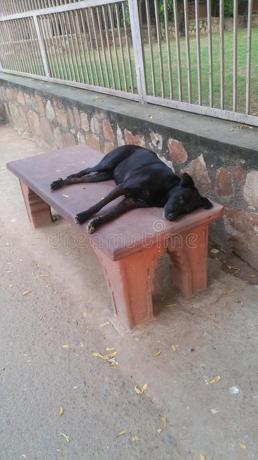 streetdog el dormir imagen de archivo