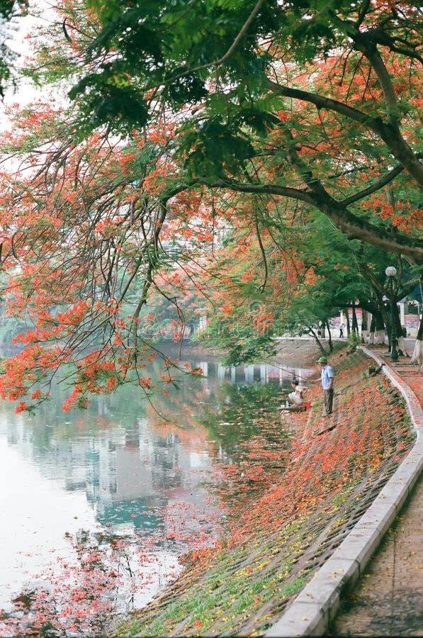 Streetlife, Film, 135mm, Vietnam stockfotografie