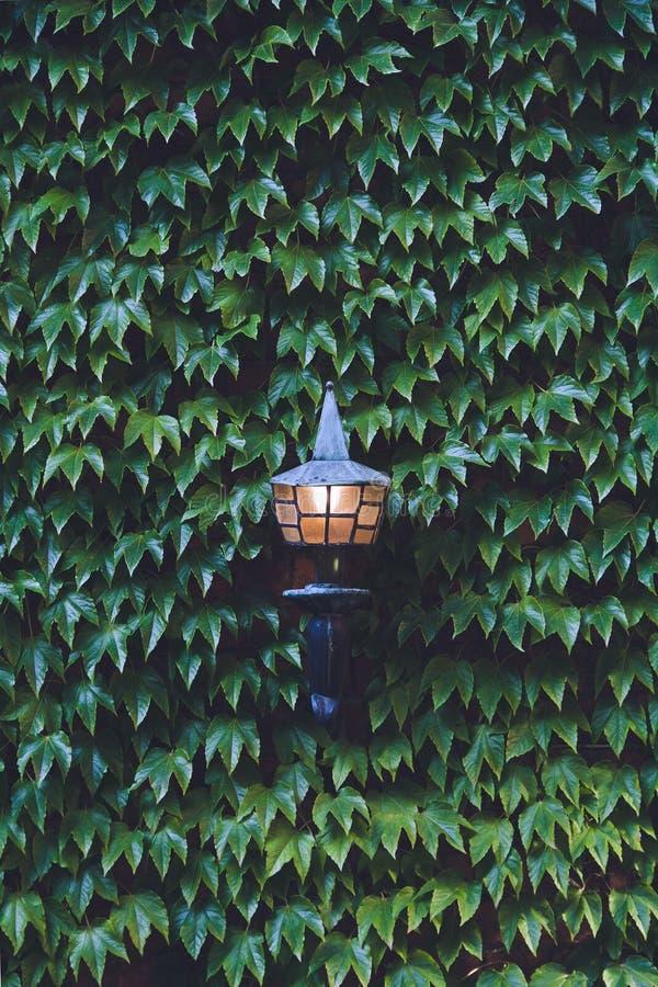 streetlight images stock