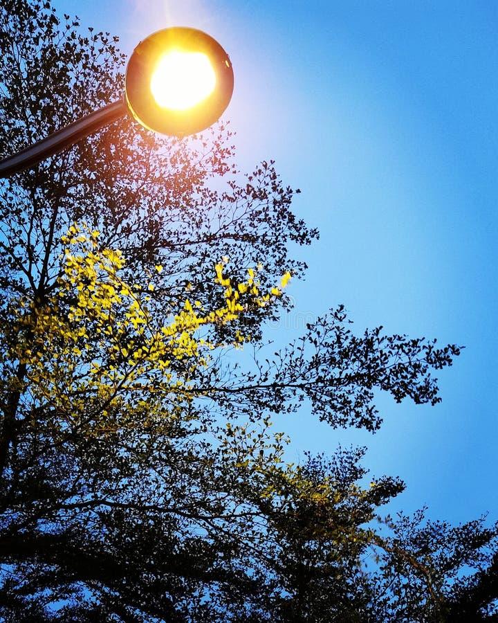 streetlight immagini stock libere da diritti