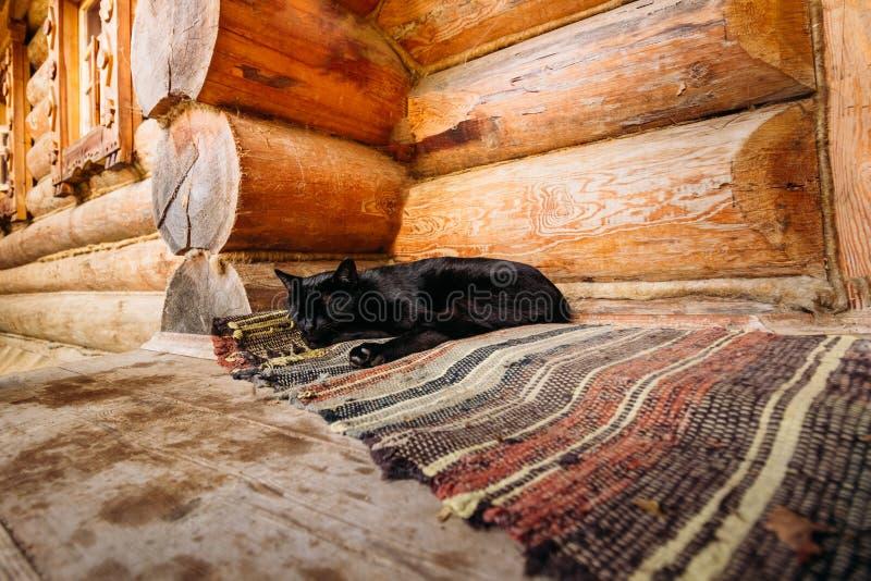Streicheln Sie die schwarze Farbe der Katze, die auf dem Boden schläft lizenzfreies stockbild