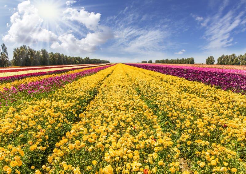 Streifen von gelben und roten Blumen lizenzfreie stockbilder