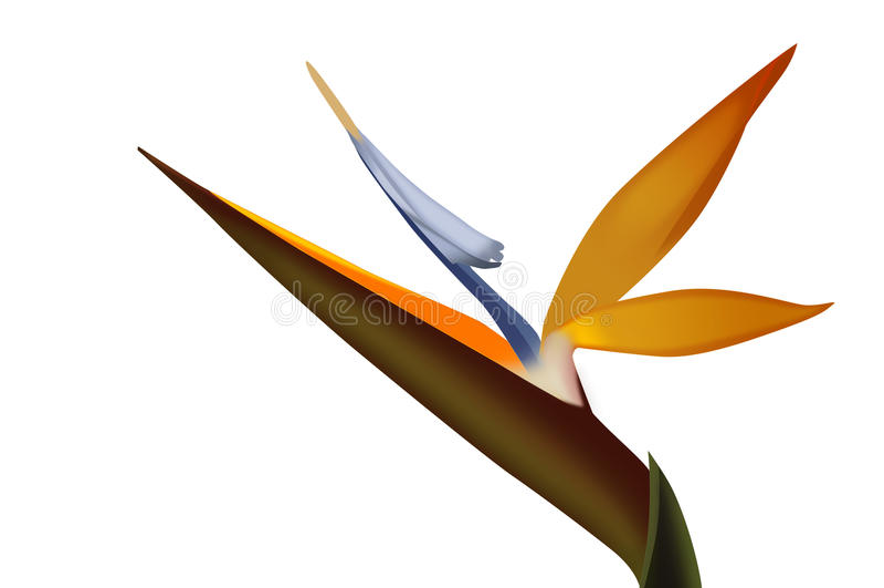 Strelezia, ptak raju kwiat zdjęcie royalty free