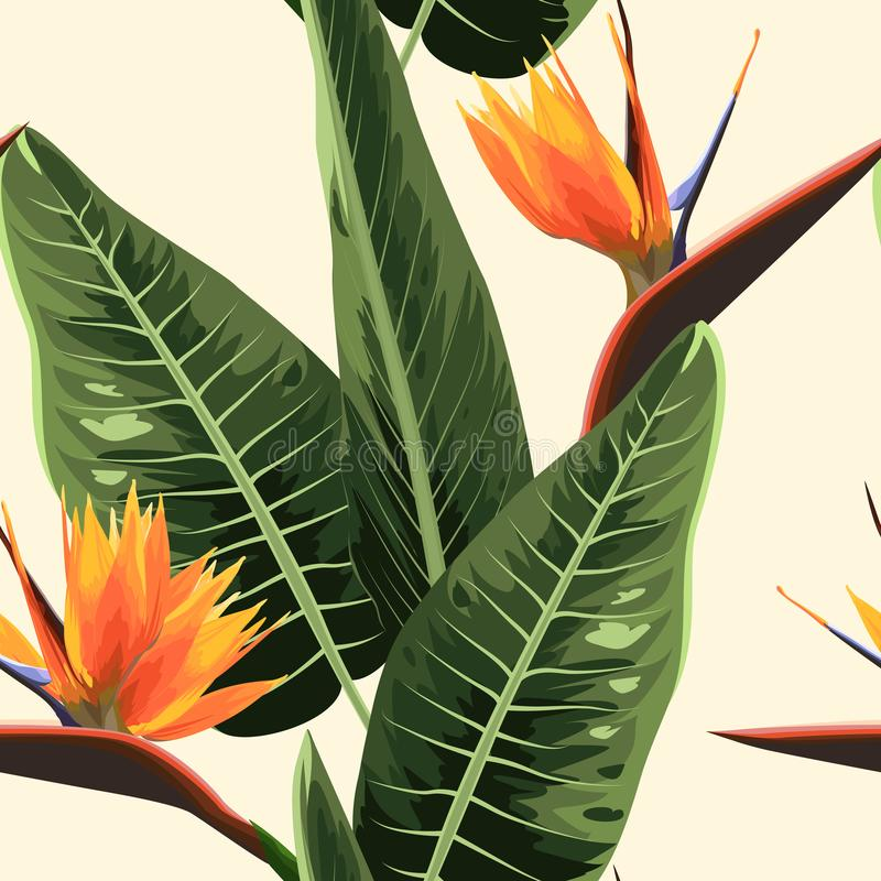 Strelitzia bird of paradise exotic tropical bright orange flowers and green leaves. Realistic watercolor illustration. Strelitzia bird of paradise exotic royalty free illustration