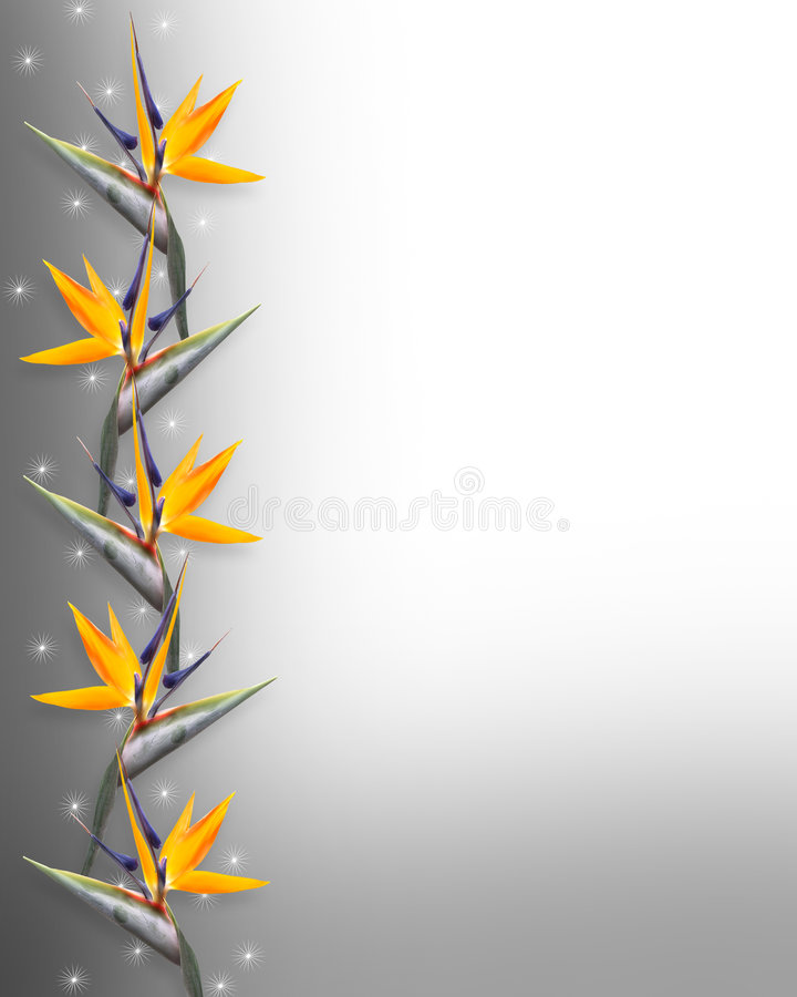 strelitzia för paradis för fågelkant blom- vektor illustrationer