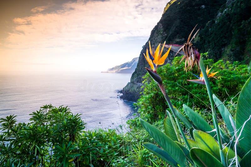 Strelitzia que florece en Madeira, Portugal fotos de archivo libres de regalías