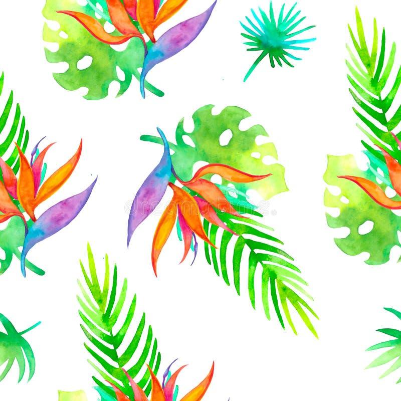 Strelizia tropicale senza cuciture del modello di estate con il fiore esotico - uccello del paradiso Struttura senza fine per la  royalty illustrazione gratis