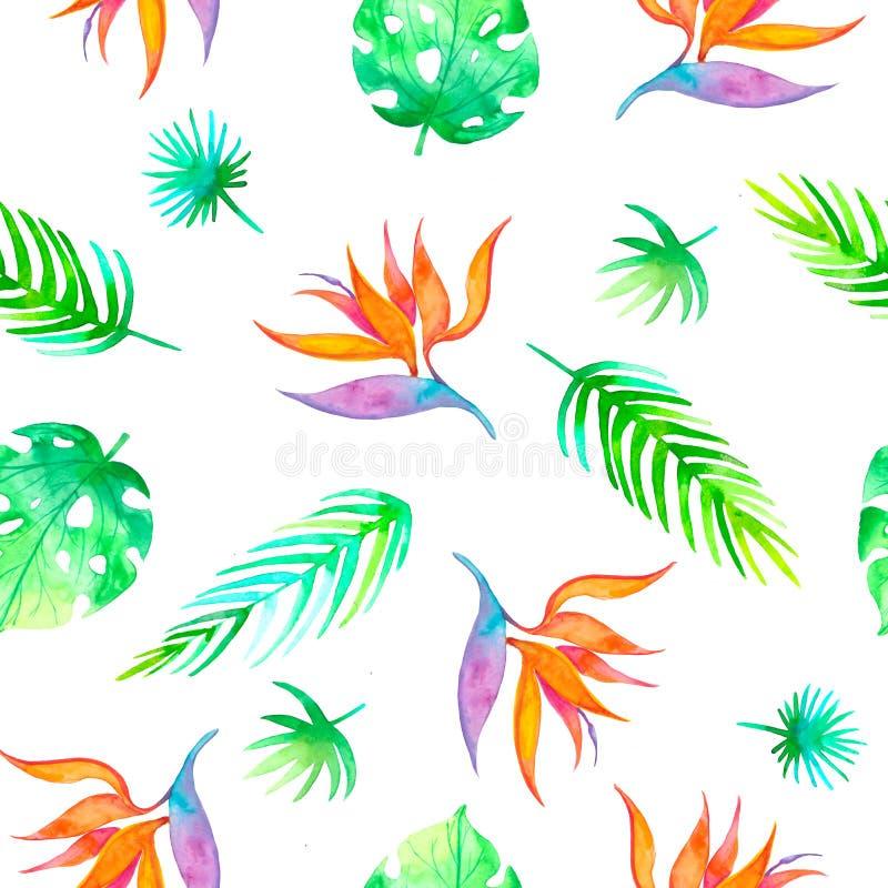 Strelizia tropicale senza cuciture del modello di estate con il fiore esotico - uccello del paradiso Struttura senza fine per la  illustrazione vettoriale