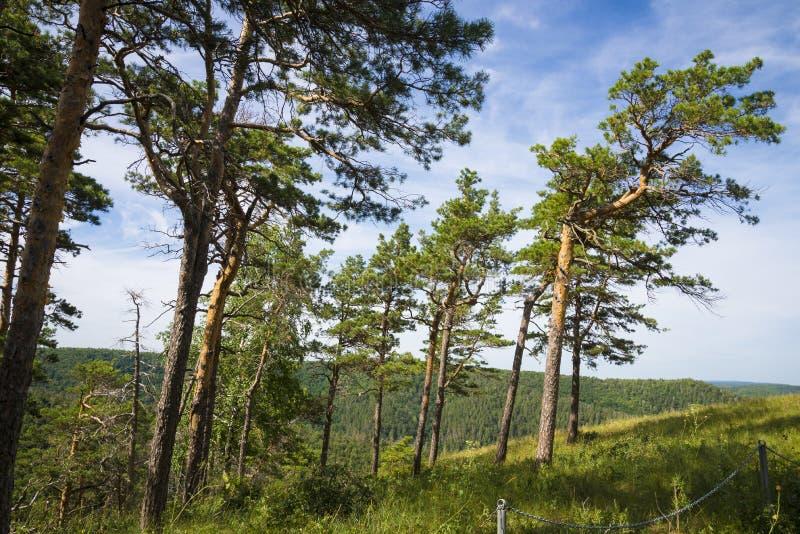 Strelnaya Mountain. Attraction of the Samara region. On a Sunny summer day stock image