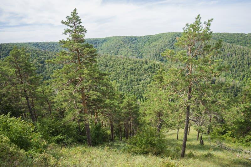 Strelnaya Mountain. Attraction of the Samara region. On a Sunny summer day stock photo