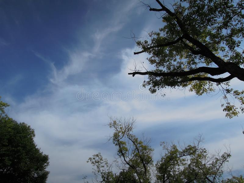 strenching往天空的一棵树 免版税库存图片