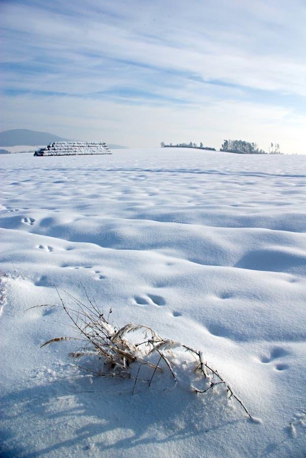 Strenger Winter lizenzfreie stockbilder