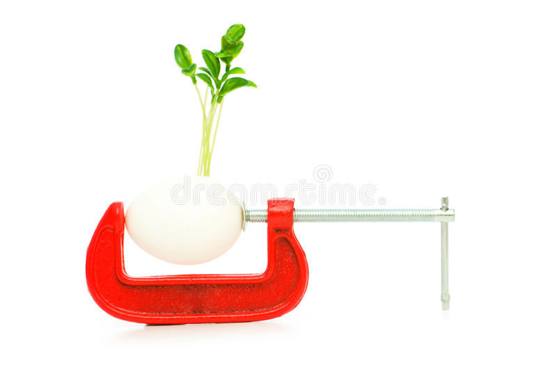 Download Strength Concept With Egg And Clamp Royalty Free Stock Images - Image: 12434719