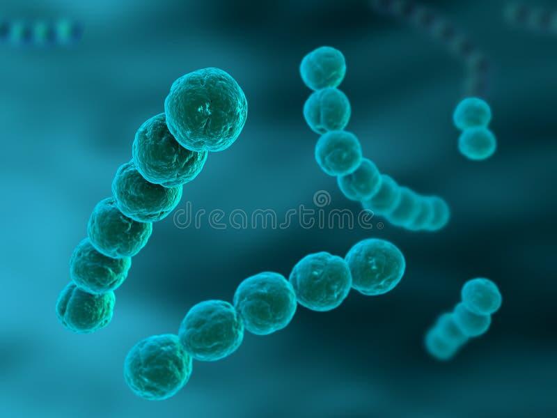 Streptococcus ilustração do vetor