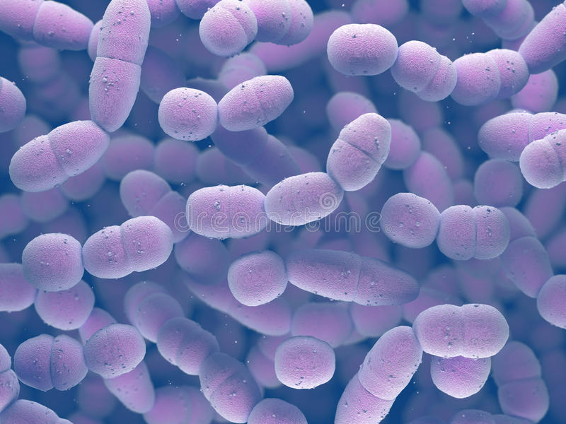 Streptococcus Pneumoniae Bacteria royalty free illustration