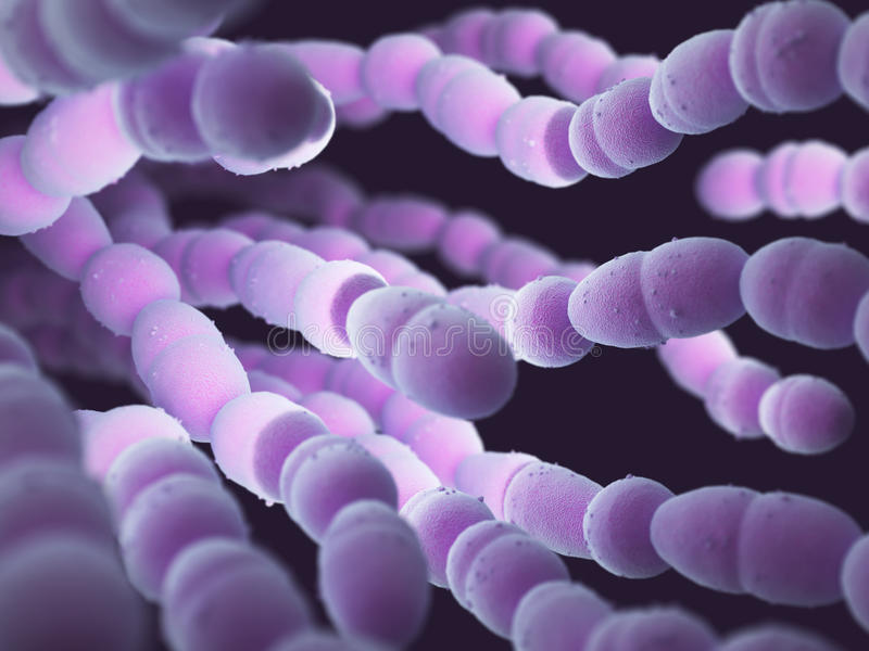 Streptococcus Pneumoniae Bacteria royalty free stock photos