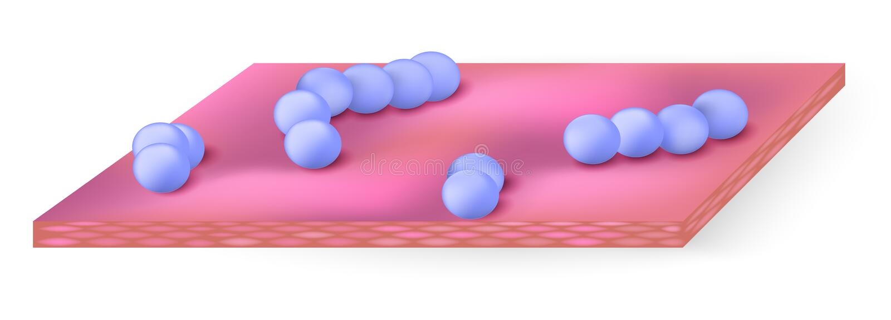 streptocoque illustration de vecteur