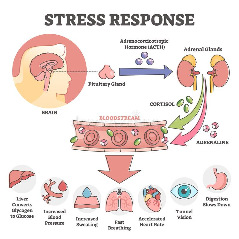 Free Stress Response Anatomical Scheme With Body Inner Reaction Outline Concept Stock Image - 210572681
