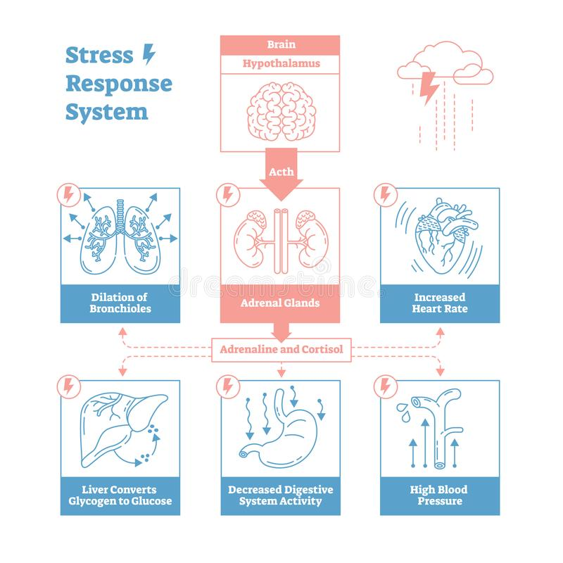 Stress response biological system vector illustration diagram,anatomical nerve impulses scheme.Clean outline graphic design poster royalty free illustration