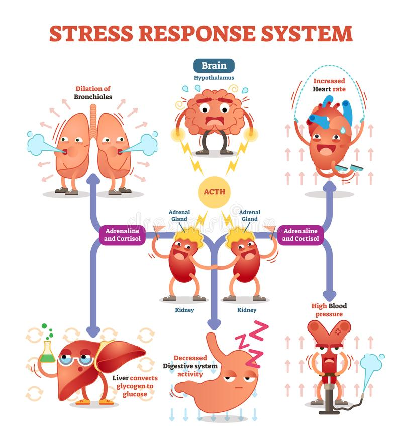 Stress response system vector illustration diagram, nerve impulses scheme. Educational medical information. Expressive cartoon characters vector illustration