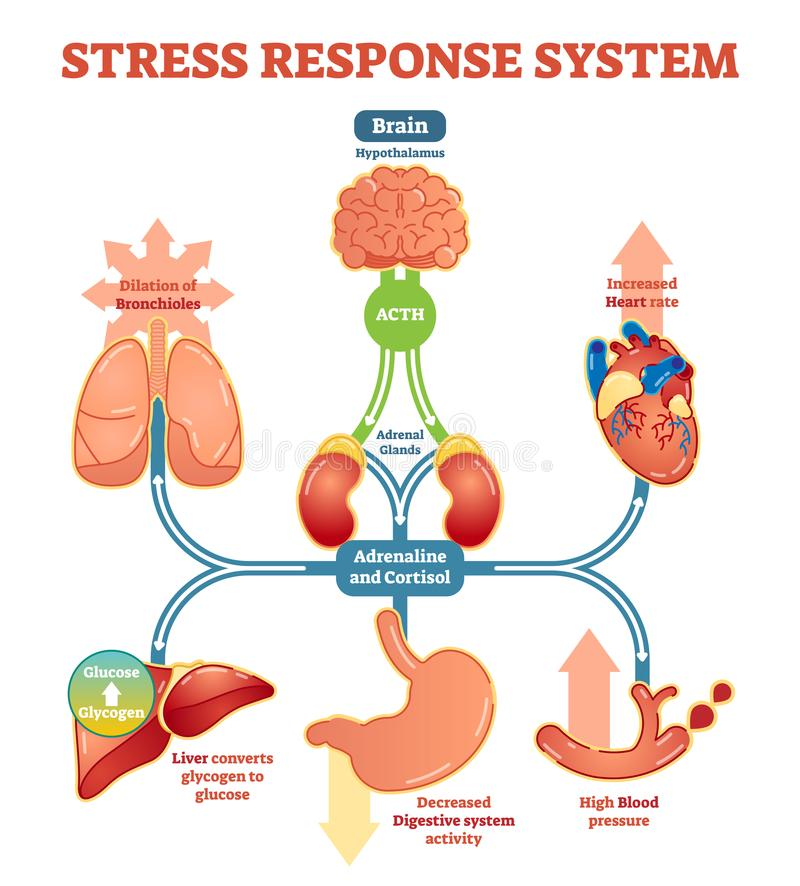 Stress response system vector illustration diagram, nerve impulses scheme. vector illustration