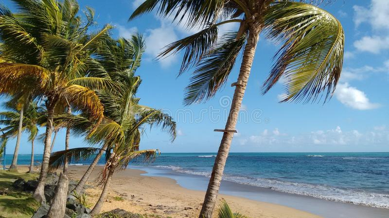 A stretch of beach in Puerto Rico. A quiet stretch of beach in Puerto Rico with sand, palm trees and aquamarine sea, pale blue sky with a few clouds royalty free stock images
