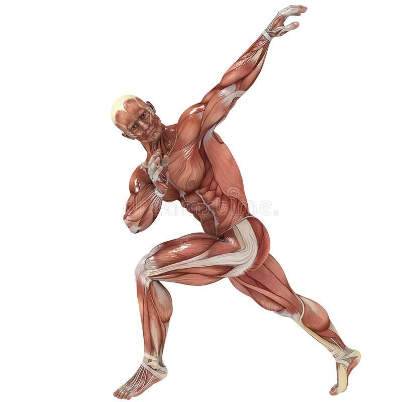 Stretch. A male model showing the muscles and his flexibility vector illustration