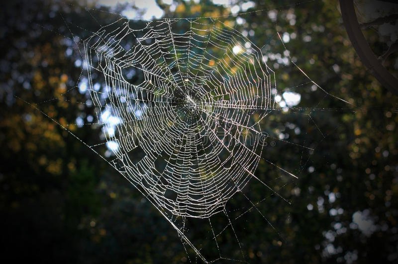 Stretched Spiderweb stock photography