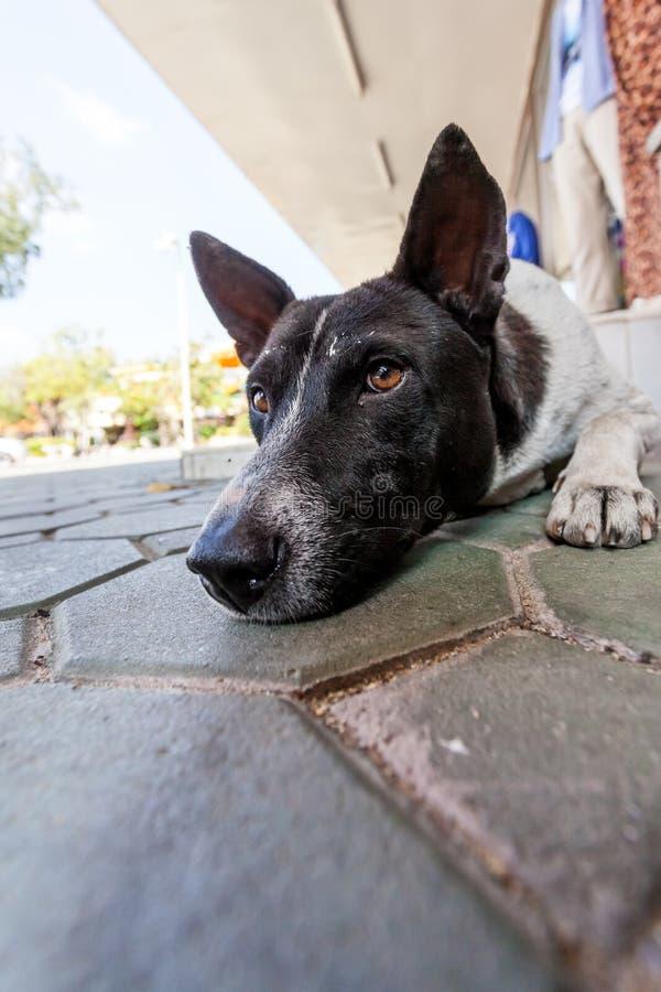 Stretdog imagen de archivo